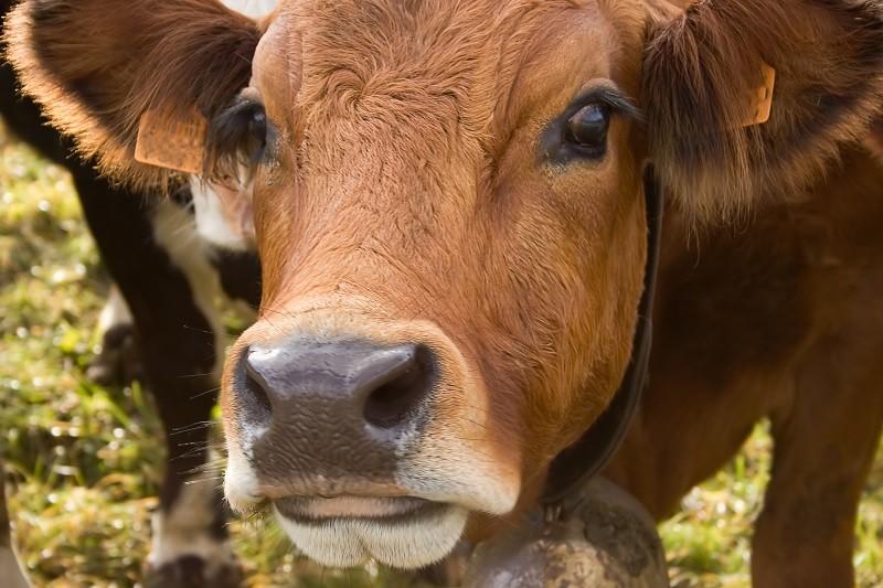 Allevatori indicono giornata della carne: ma non si può fermare il cambiamento!