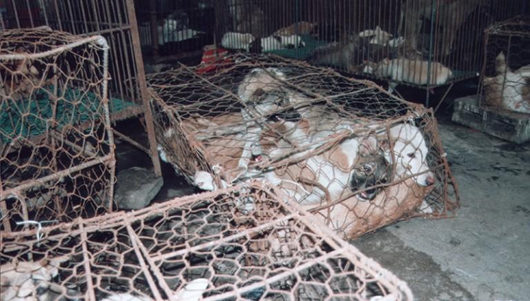 Fermiamo il Festival di Yulin. Richiesta di incontro con l'Ambasciatore cinese