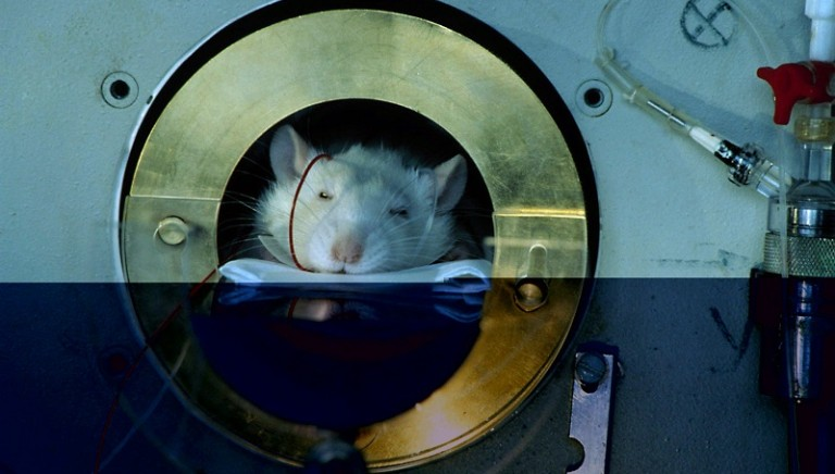 Animali ibernati per viaggi spaziali: non è scienza ma barbarie