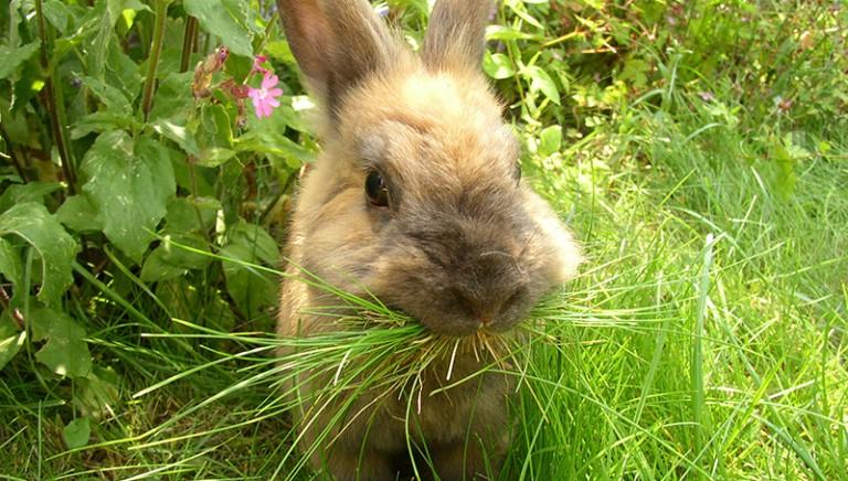 Uccise a martellate due conigli: confermato licenziamento professore
