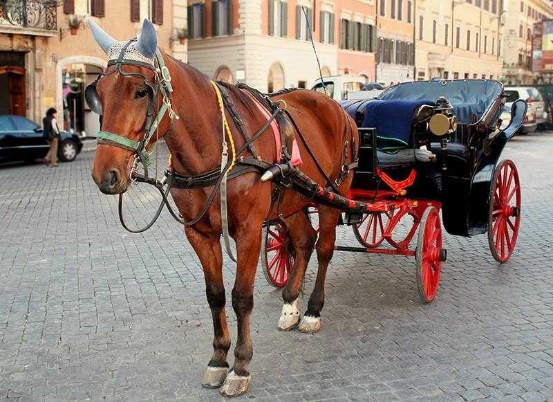 Roma: un altro cavallo cade a terra. Mesi contati per le botticelle romane