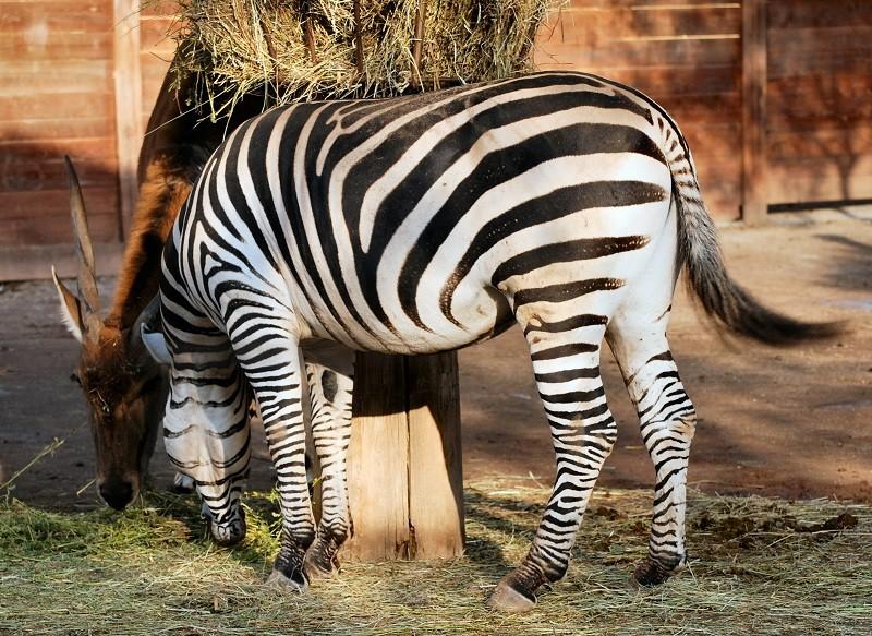 Foto di archivio: animali in uno zoo