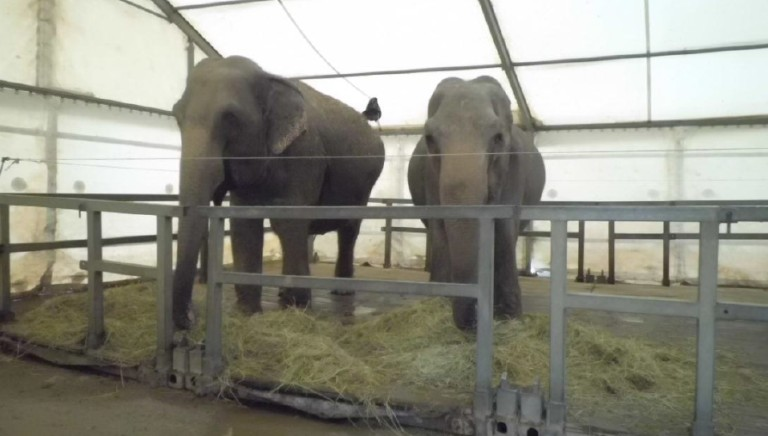 Medrano circus: the court has sentenced the circus? director for cruelty to animals