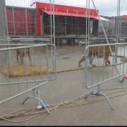 Tigri al Circo Medrano