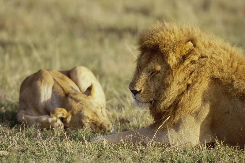 Ministro Galletti a Bruxelles dica SI alla protezione dei leoni in Africa
