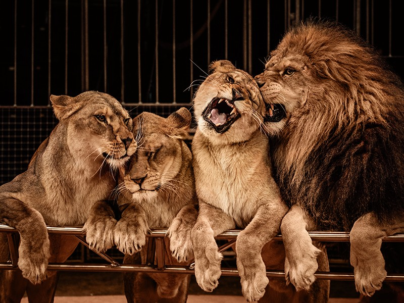 Evviva, il direttore di Rai 3 cancella (dal 2017) il circo con animali!