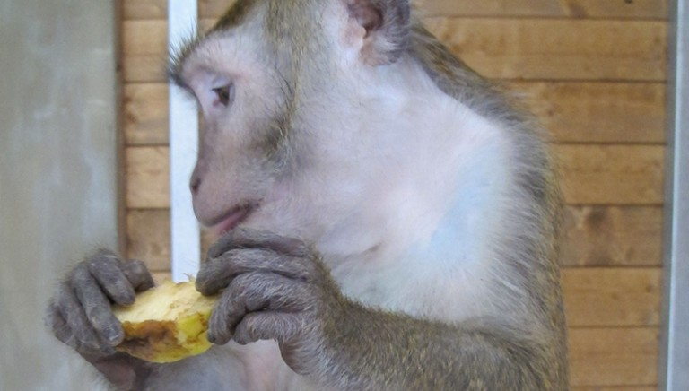 A new home for the 16 macaques of the university of Modena