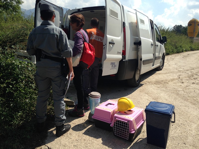 La raccolta e la consegna di cibo e altri materiali per gli animali terremotati