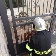 Le prime azioni di soccorso agli animali