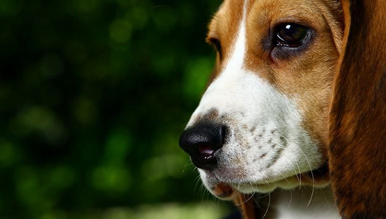 Ministero proroga ordinanza incolumità pubblica per aggressione cani