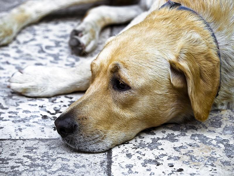 Investe cane e scappa: identificata veterinaria. L'Ordine chiarisca ora!
