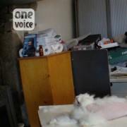 Francia allevamenti di conigli d?angora. Immagini investigazione One Voice