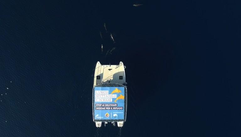 Stop ai delfinari: l'unico spettacolo è in mare! Dolphin watching a Taranto