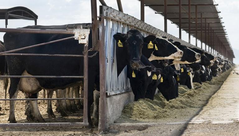 Alimentazione e clima: Renzi dica no al sostegno dell'industria di carne