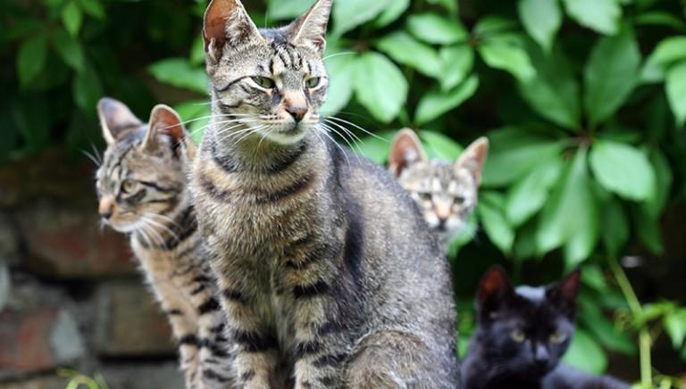 Gatto scuoiato a Perugia: LAV parte civile nel processo