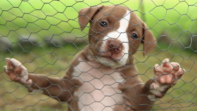 Brescia, cani con coda e orecchie tagliate: due condanne
