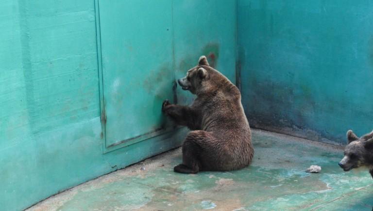 Ministero Ambiente a LAV: ok stop spettacoli con animali in ZOO!