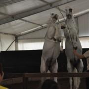 2015 - Spettacolo con cavalli