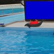 2015 - Delfino manipolato fuori dall?acqua