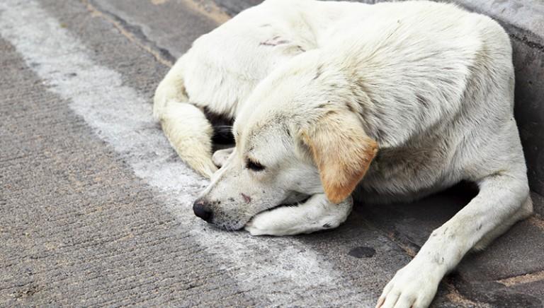 Cane morto per sevizie. L'orrore corre sul web