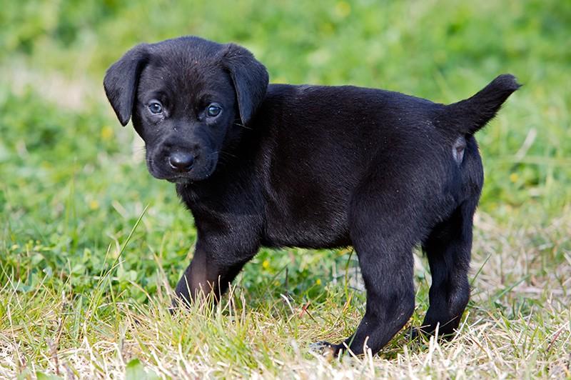 Ok a tassa cani non sterilizzati, ma senza sconti a cacciatori e allevatori