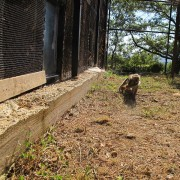 I macachi nell'area all'aperto, nel Centro di recupero di Semproniano (GR)