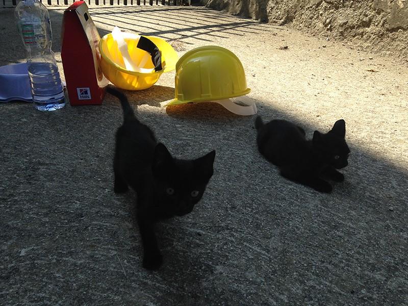 Terremoto: a febbraio un Campo sterilizzazioni gratuite e microchip gatti