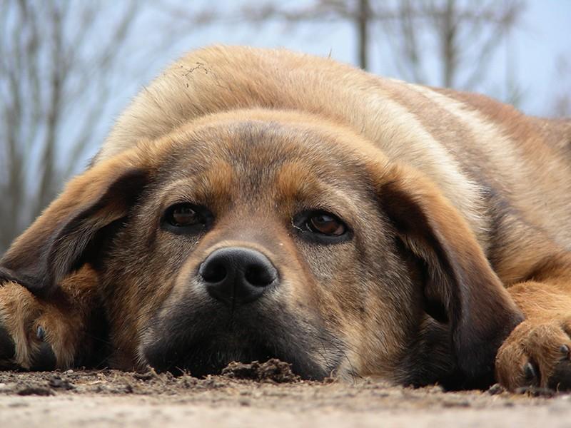 #Stopbotti:pericolo per animali e persone.Vietarli è atto di responsabilità