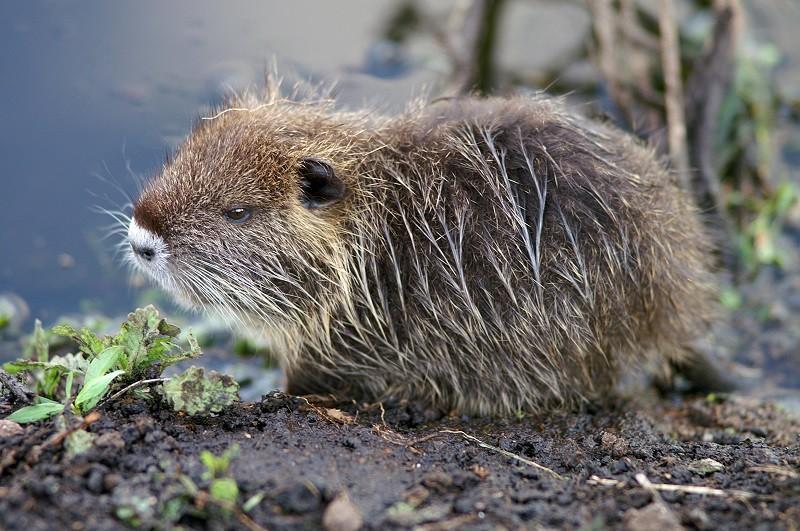 LAV, ENPA E LAC a Gentiloni: 2017 inauguri nuova politica per la fauna