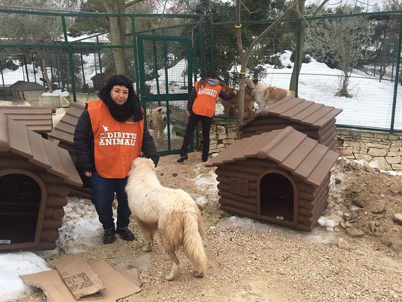 Puglia, emergenza freddo nei canili: LAV dona le prime 50 cucce