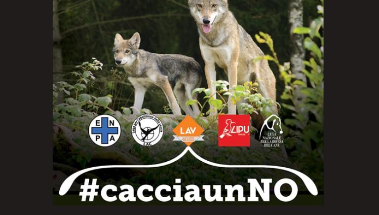 Il 2 febbraio si vota per salvare i lupi. #cacciaunNO l'appello associazioni