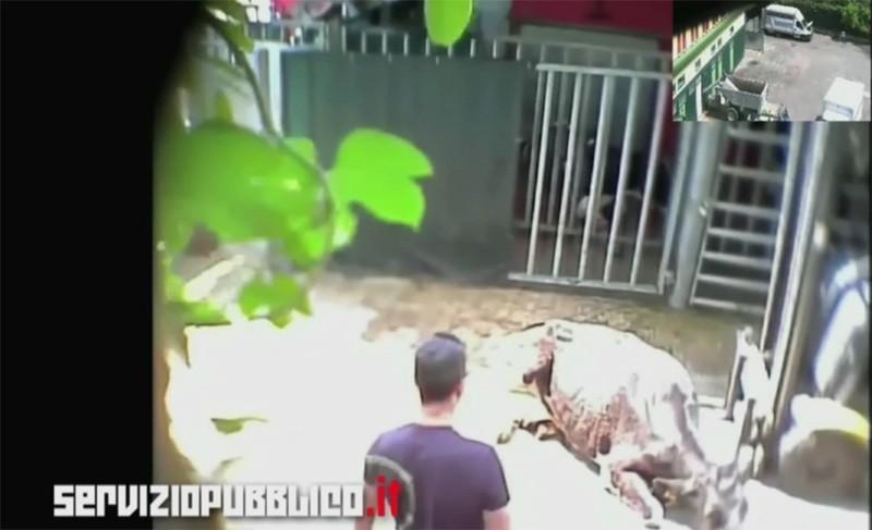 Scandalo macello Italcarni: condannati due veterinari ASL