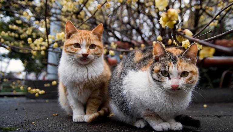 LAV con le Associazioni svizzere. SI alla sterilizzazione dei gatti liberi di uscire