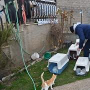 Campo Sterilizzazioni e Microchippatura: cattura e rilascio dei gatti