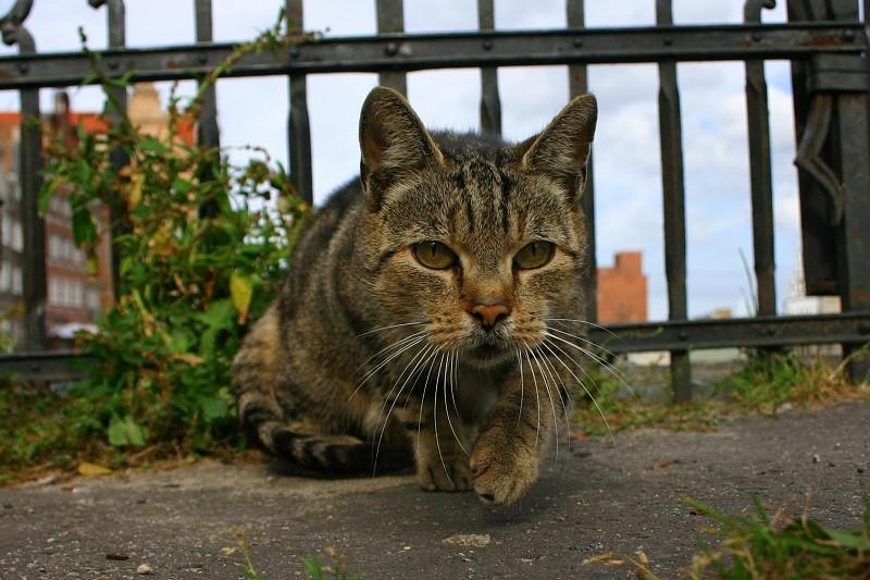 Ministero della Salute: i gatti liberi non di proprietà devono essere sterilizzati