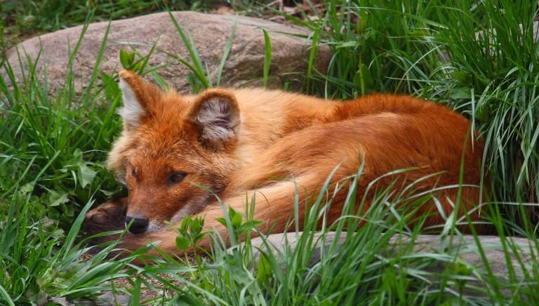 Legge Parchi, modifiche da bocciare: indeboliscono tutela animali e ambiente