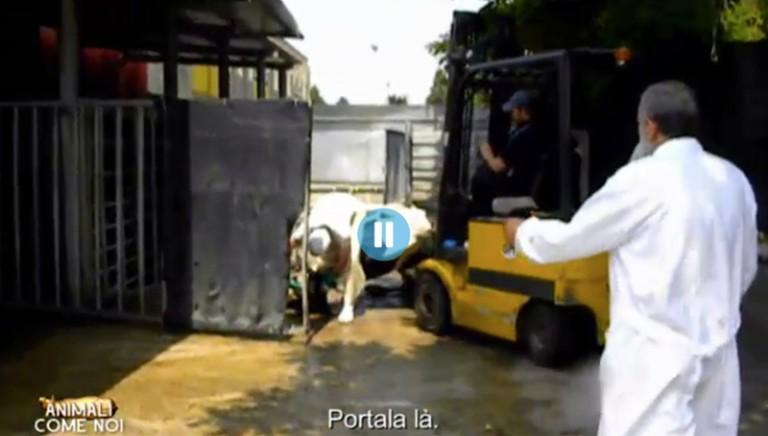 Italcarni: Ordine Brescia apre procedimento su veterinari condannati