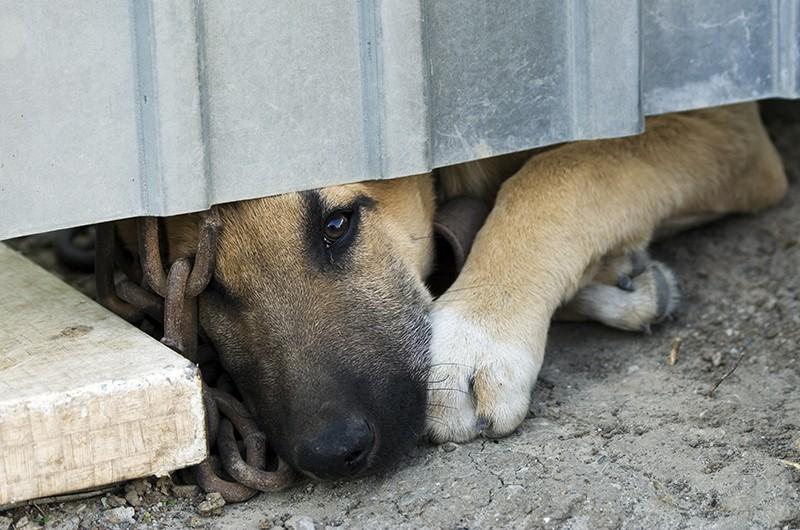 Cassazione: al Sindaco competenza per animali confiscati