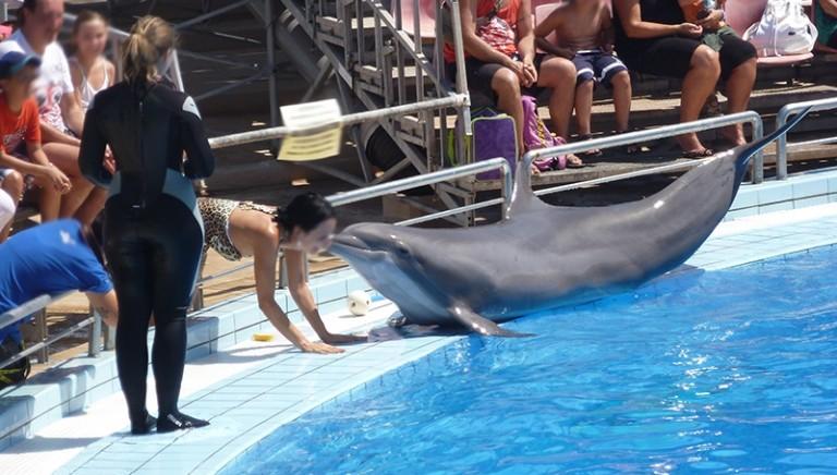 Delfinari, Camera conferma divieto nuoto con animali: no a emendamento