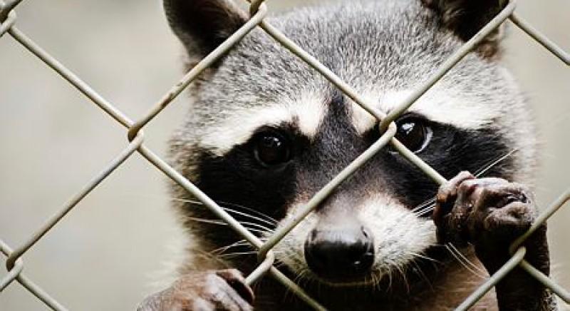 YNAP annuncia politica Fur-Free, con LAV e Humane Society