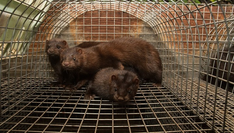 Repubblica Ceca: NO allevamenti per pellicce. Voto finale in estate