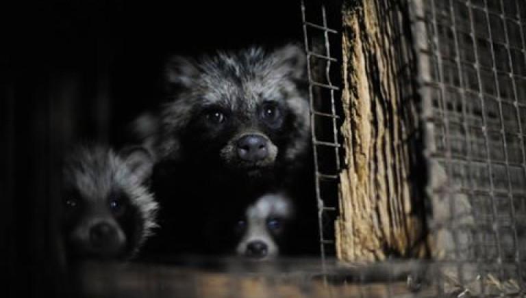Repubblica Ceca vieta allevamenti di animali per pellicce.  A quando in Italia?