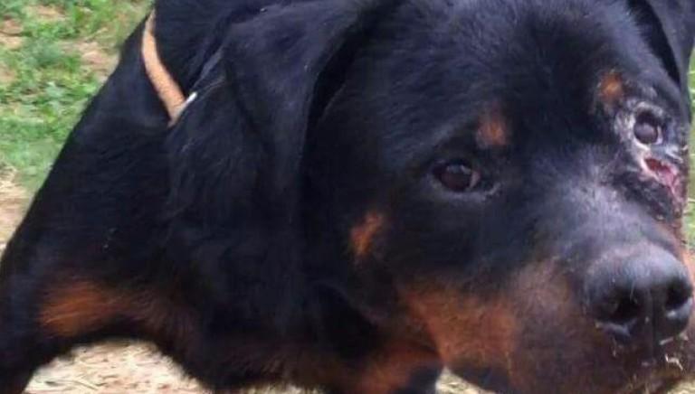 Ogni cane ha diritto all'adozione: storia di Achille, in cerca di famiglia