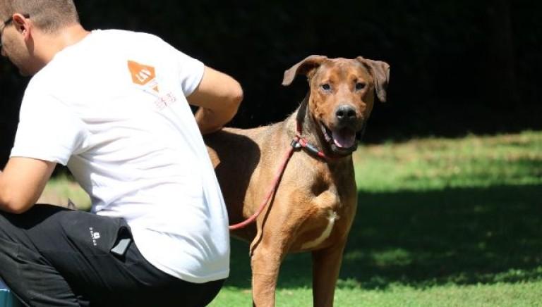 LAV e Comune di Spoleto insieme per il cane Dustin