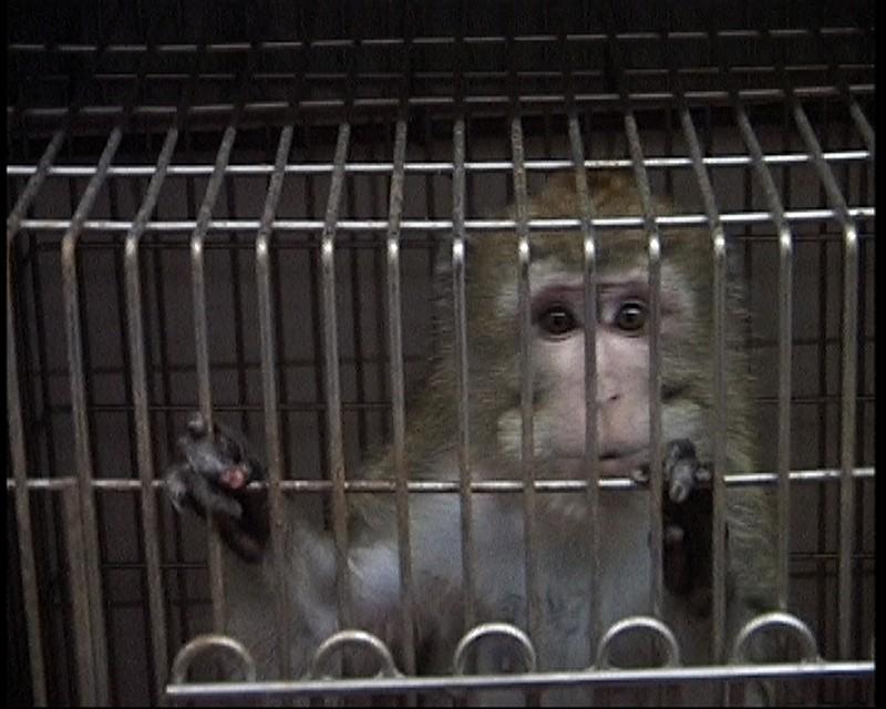 La ricerca senza animali è il futuro. Convegno a Roma il 9 novembre