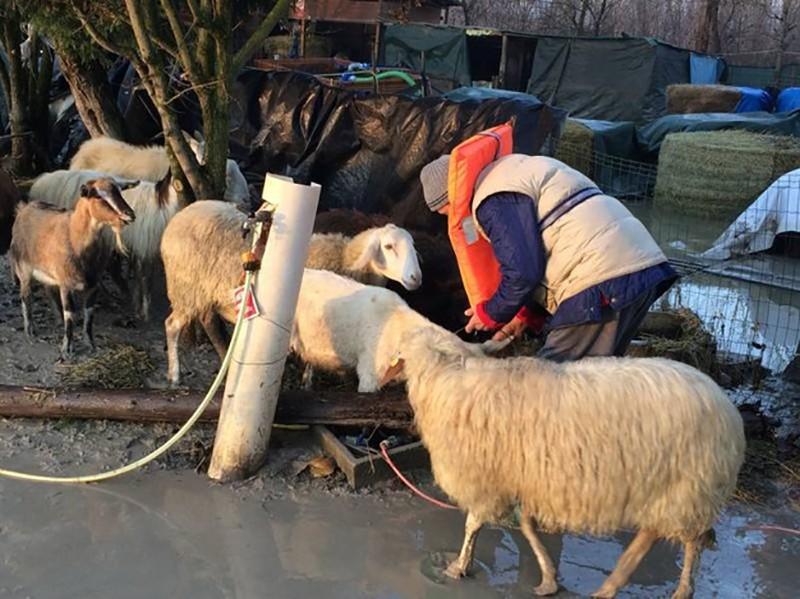 LAV in aiuto di animali e famiglie colpite da piena del fiume Secchia (Modena)