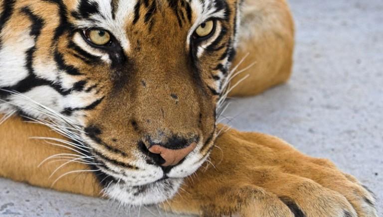 Vittoria! Non ci sarà uno Zoo a Torino