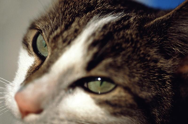 Perugia, gatto scuoiato: assolto imputato. PM ricorra in Appello