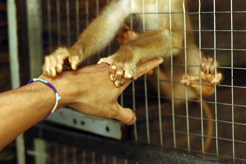 Gas di scarico testato su scimmie, sperimentazioni ferme al secolo scorso