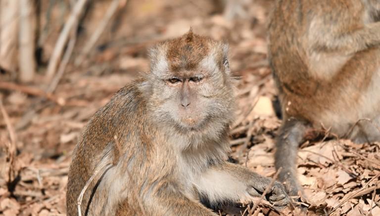 Il recupero dopo la sperimentazione: i progressi delle due colonie di macachi
